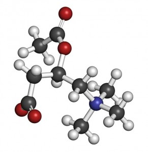 Acetylcarnitine (ALCAR) nutritional supplement molecule. Atoms are represented as spheres with conventional color coding: hydrogen (white), carbon (grey), oxygen (red), nitrogen (blue).