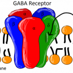 GABA as a Nootropic