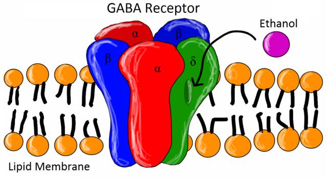 Gaba Reseptori