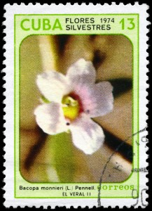 "Bacopa is significant all over the world. CIRCA 1974: A Stamp printed in CUBA shows image of a ""Bacopa monnieri"", from the series ""Wildflowers."""