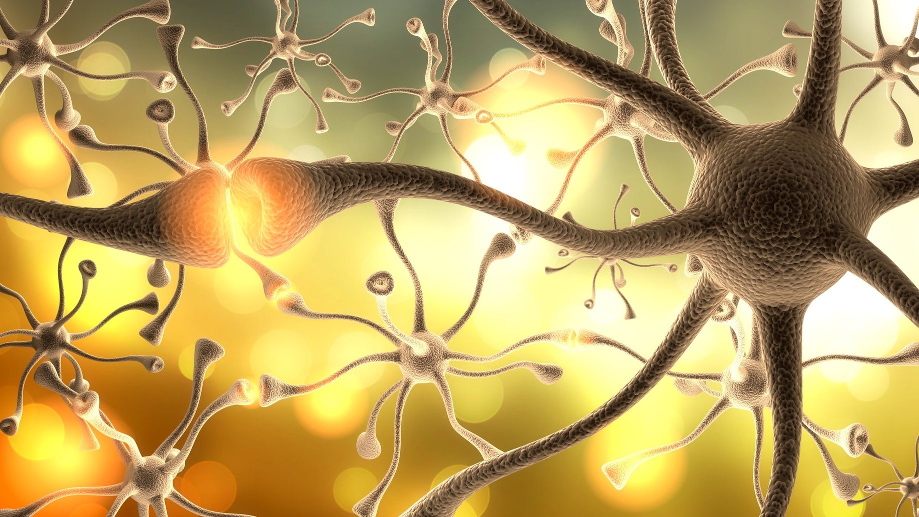 What Are Neurotransmitters And How Can I Make Mine