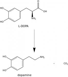 The reaction from L-DOPA to Dopamine.