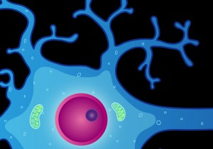 ALA may fight free radicals throughout the brain cell, including in cell membranes. Brain cell image via National Institutes of Mental Health.