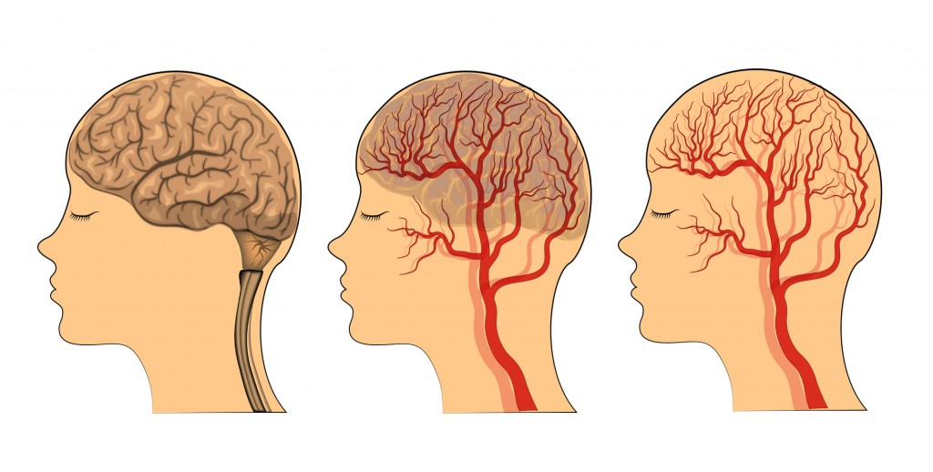 Vinpocetine: Quite possibly the best nootropic nutrient for boosting blood flow to the brain.