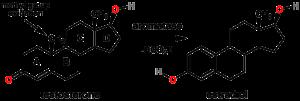 1200px-Testosterone_estradiol_conversion