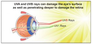 UVA-UVB-Eye-Free-Radicals