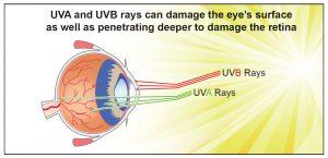 UVA-UVB-Eye-Free-Radicals