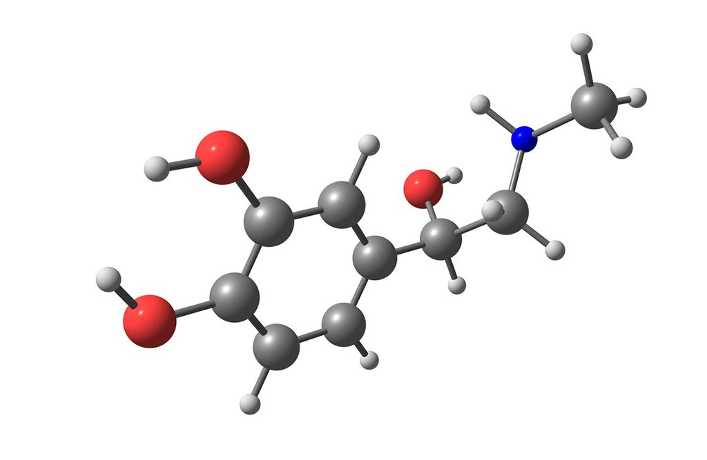 Shown: Adrenaline model molecule. Yohimbe's potential to regulate adrenaline may partly explain its use in pre-workout formulas.