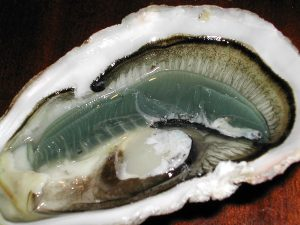 The oyster is a rich source of DAA. By User:Anthere (personal picture of an oyster harvested in france) [GFDL or CC-BY-SA-3.0], via Wikimedia Commons