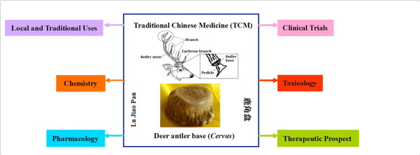 Deer antler as a traditional Chinese medicine.