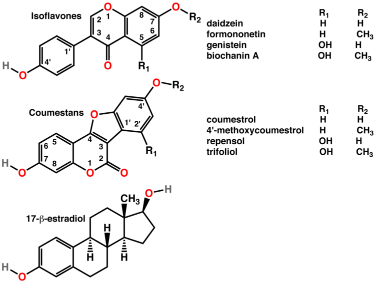 isoflavones-mimic-have-a-similar-structure-to-estradiol-estrogen