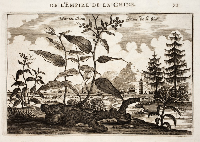 A depiction of ginseng root and berries in ancient China. Johan Nieuhof [Public domain, CC0 or CC0], via Wikimedia Commons