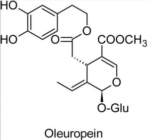 Oleuropein, the chief phenolic compound in olive leaf.