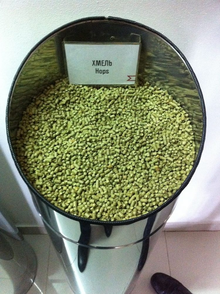 Hops for beer brewing. By JukoFF (Own work) [CC BY-SA 4.0], via Wikimedia Commons