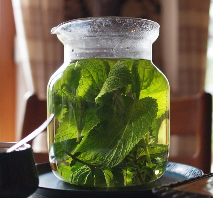Lemon balm tea. By KaiMartin (Own work) [CC BY-SA 3.0 or GFDL], via Wikimedia Commons