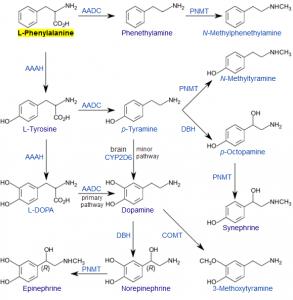 phenylalanine-biosynthesis-pathways
