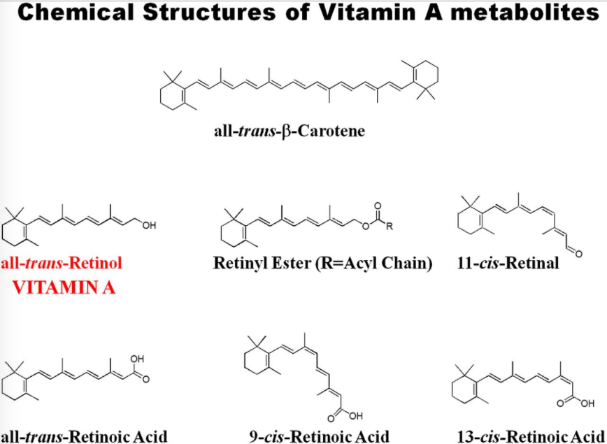 Chemical structures of different retinoid species.