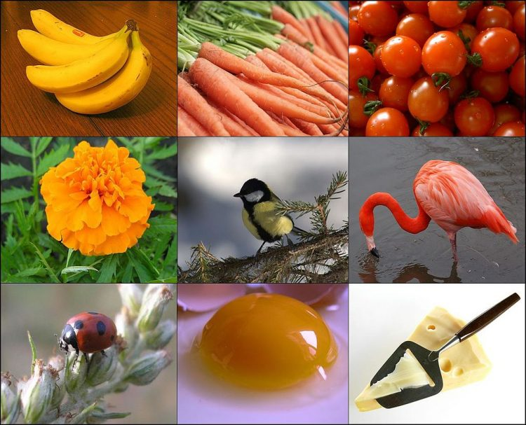 Foods rich in beta-carotene or carrying it as a pigment. By Images taken by various authors see individual images. The images have been combined by Jugrü [CC BY-SA 3.0], via Wikimedia Commons