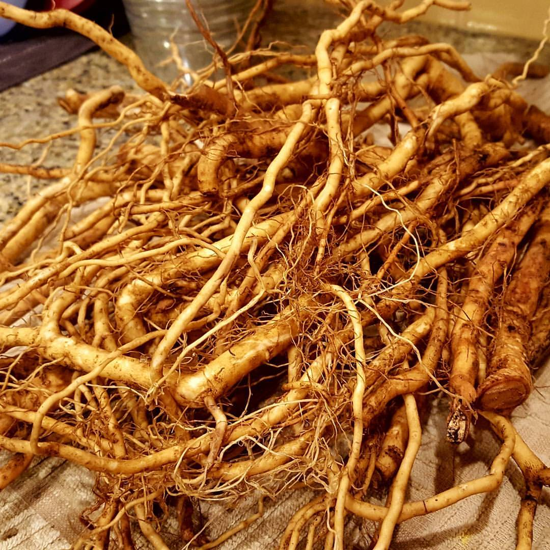 ginseng buyers in indiana