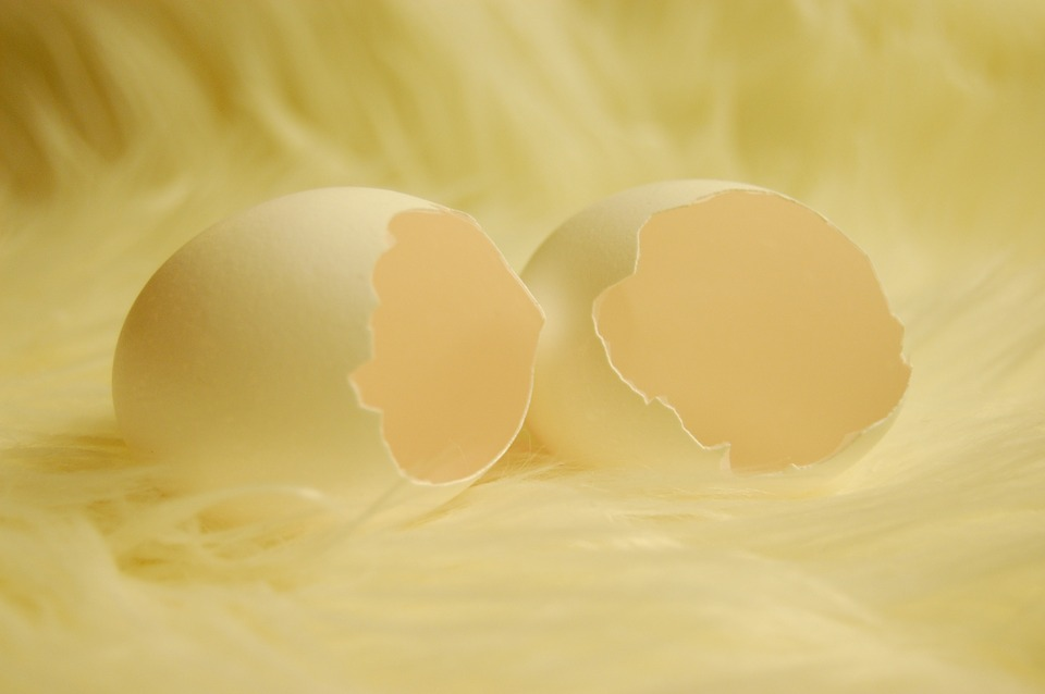 eggshellbig