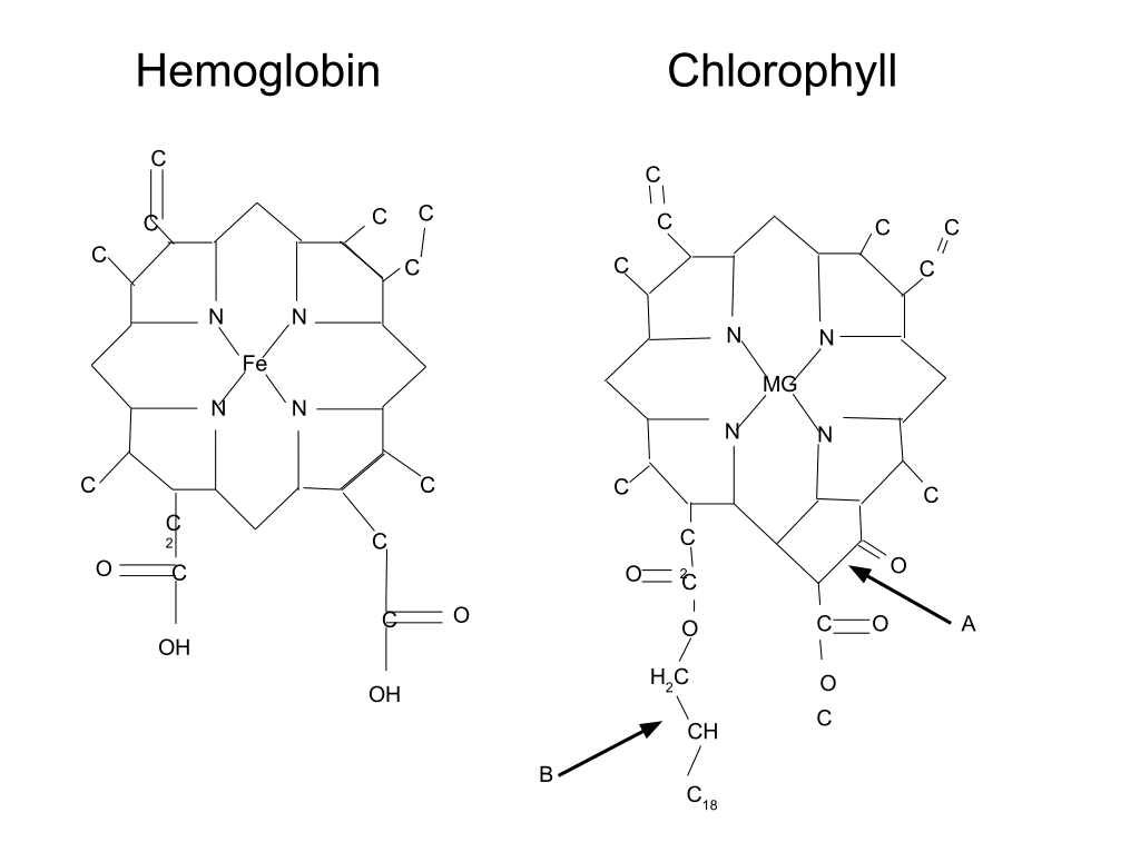 Hemoglobin-Chlorophyll