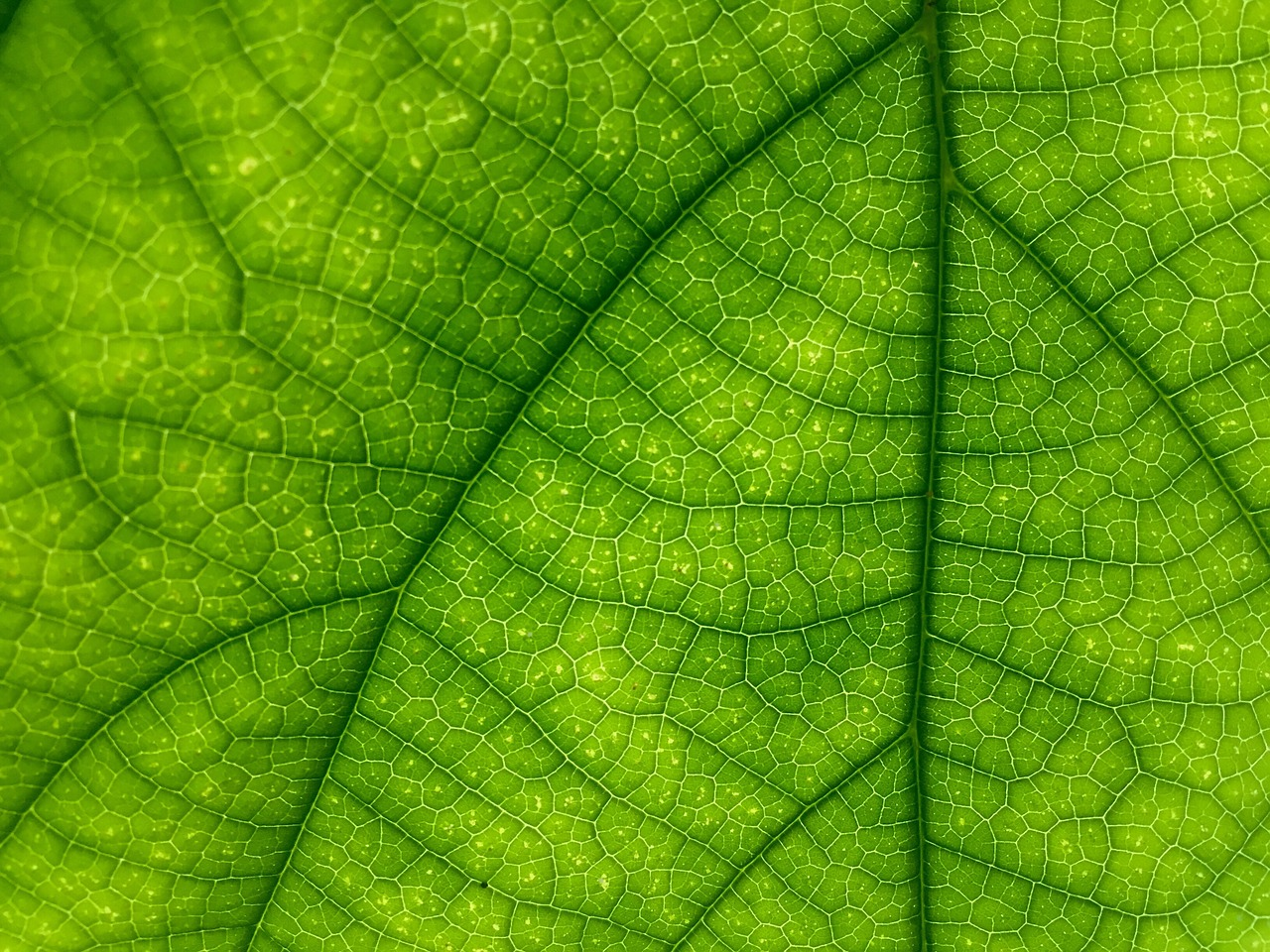 Chlorophyll as Greens - Supplements in Review