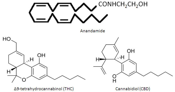 ag-2 anandamide thc cbd cannibinoid