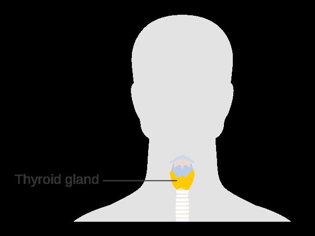 thyroid gland location
