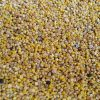 1024px-Harvested_seeds_of_homegrown_Chenopodium_quinoa