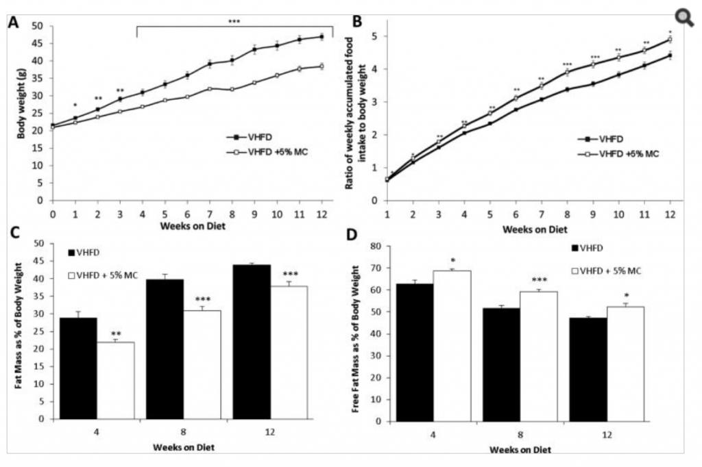 Moringa Oleifera fat loss obesity mice study results