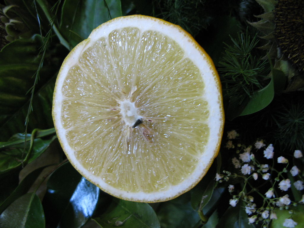bergamot orange cross section