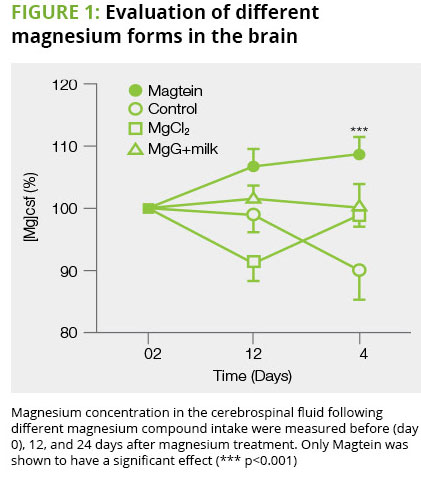 magtein improves brain magnesium levels