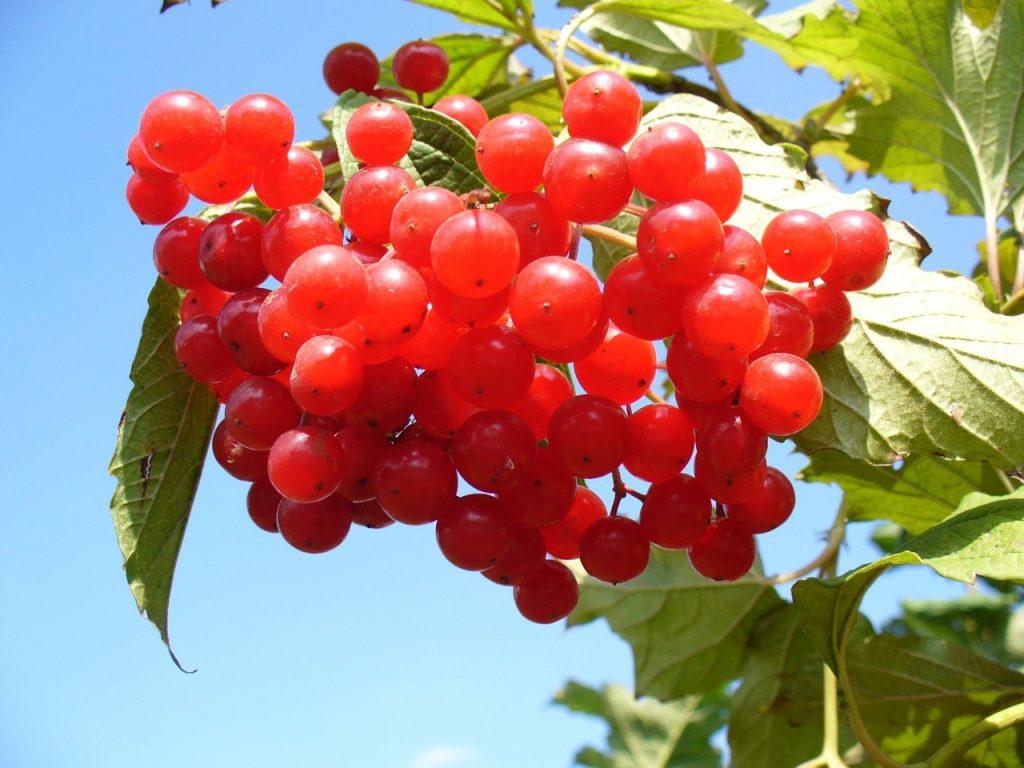 cranberry cran-max